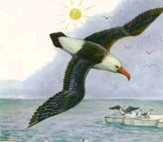 С бурей спорит альбатрос,