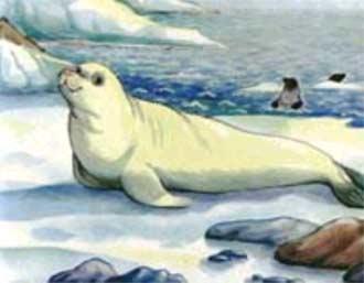 А на льду лежит тюлень