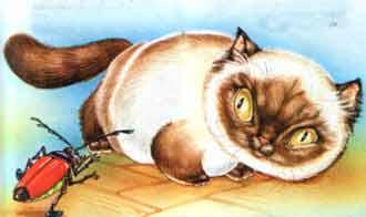 Рассердился круглый кот