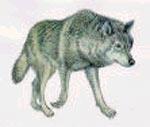 Волк и старуха Лев Толстой