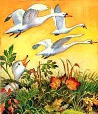 Однажды на рассвете он увидел, как в небе пролетала стая прекрасных белых птиц с длинными гибкими шеями
