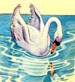 Утенок увидел свое отражение в воде и воскликнул: - Возможно ли это